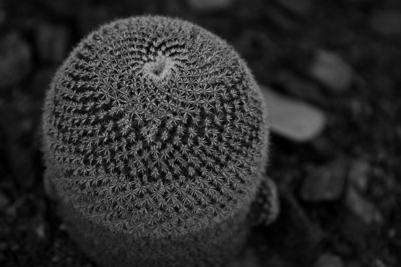 Cactus detail