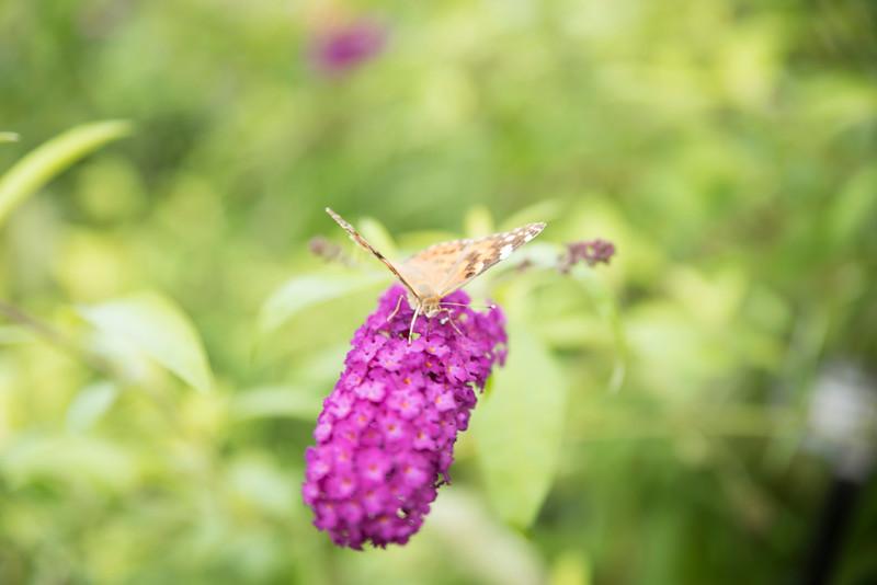 Chicago Botanic Garden 031.jpg