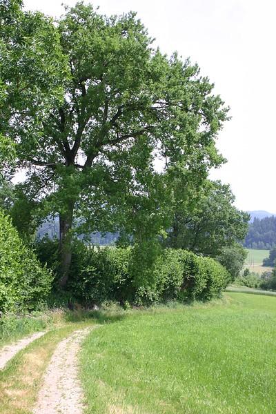 Nach der Überquerung der Luthern und des Warmisbaches, oberhalb der Kiesgrube der Grenzverlauf Zell-Ufhusen mit der alten Landstrasse.