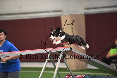 Schooley's Mountain Kennel Club AKC Agility Trial July 29-30