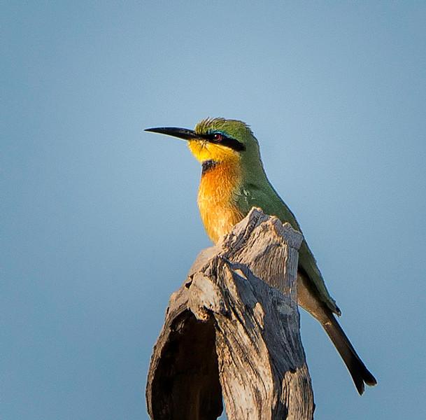 2014-08Aug-Okavango Masters-23-Edit.jpg