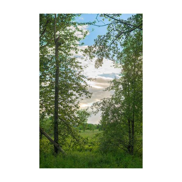 166_Trees_10x10.jpg