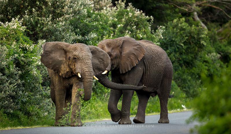 WILDLIFE | Giants of the Isimangaliso Wetlands