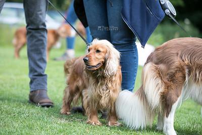 Cirencester Spaniel Walk