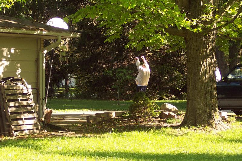 trees 059.jpg