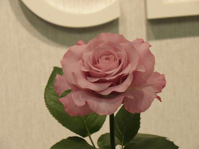 2009 TCRC Rose Show