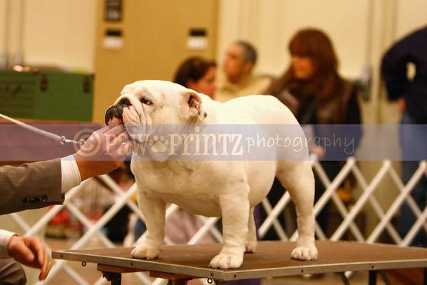Long Island Bulldog Club - 2/12/11