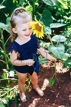 2019 Sunflower Mini