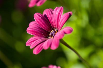 AZ Flora