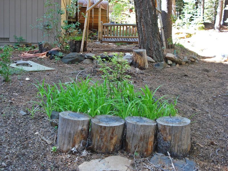 06-06-2015 First Watering Backyard Project (5).JPG