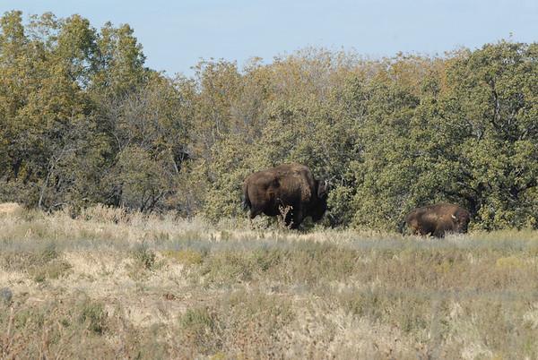Fossil Rim Wildlife Park - Glenrose, TX - Nov '12