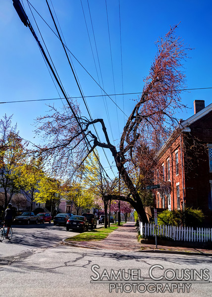 CMP has a unique way of trimming trees to make way for power lines. This particular hack job is on the corner of North St and Melbourne St.
