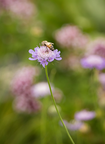 KoRedfield-Floral13.jpg