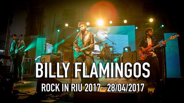 BILLY FLAMINGOS - RIR 2017