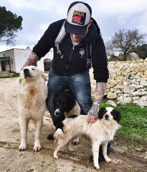 dog-whisperer-strikes-again-these-three-came-running-out-to-meet-him_16147338458_o.jpg