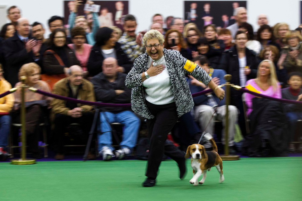 Description of . Handler Carol Herr reacts after winning best of breed with a Beagle named Encore's Rerun of Roirdan during the 137th Westminster Kennel Club Dog Show in New York, February 11, 2013. More than 2,700 prized dogs will be on display at the annual canine competition. Two new breeds, the Russell terrier and the Treeing Walker coonhound, will be introduced in the contest. REUTERS/Lucas Jackson