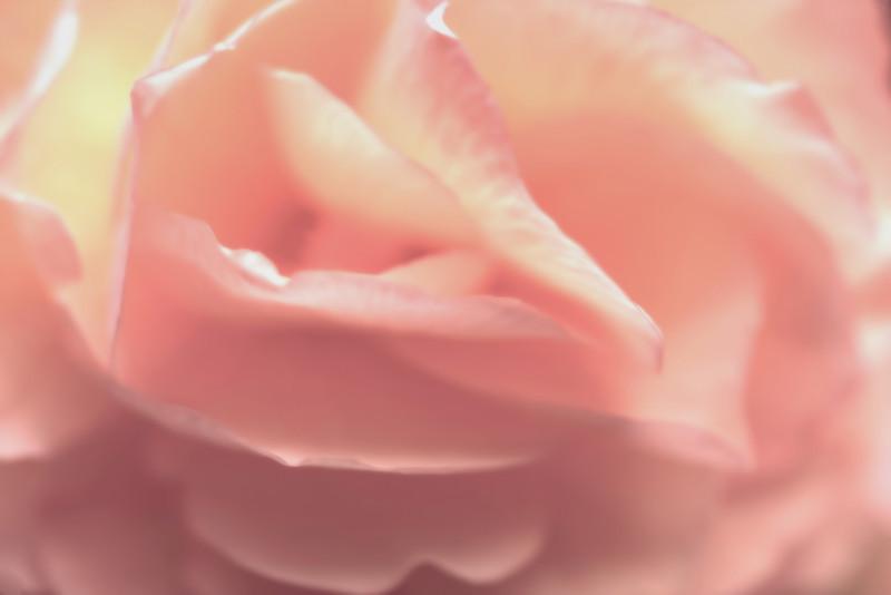 Pink Chiffon II