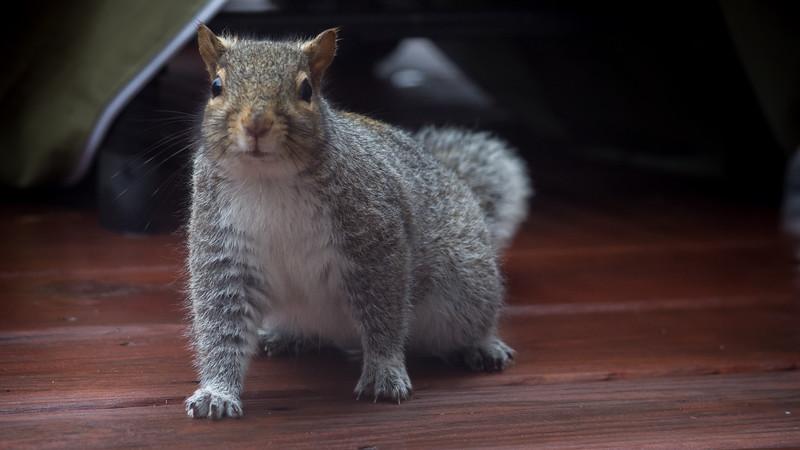 squirrel (2 of 2).jpg