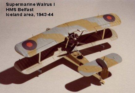Walrus-2.jpg