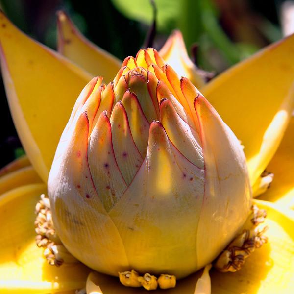 Yellow Succulent.jpg
