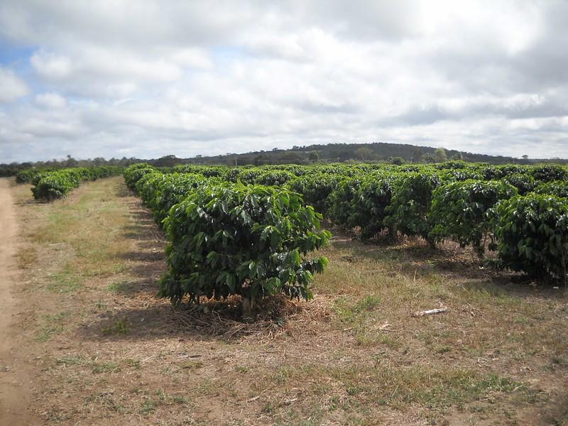 Fazenda Santa Barbara (1).JPG