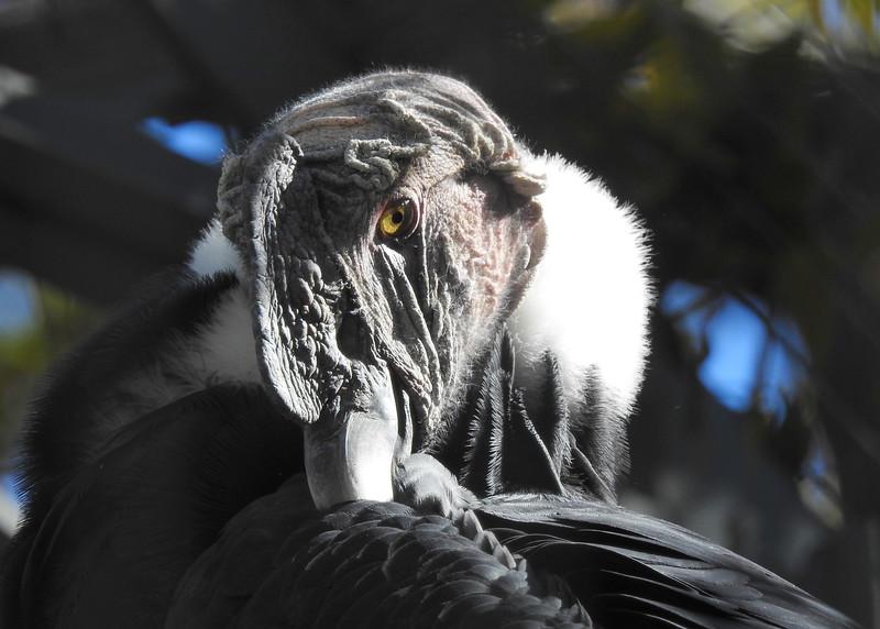 Denver Zoo 2018 (3438).JPG
