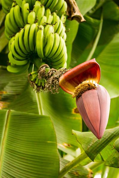 Rainforest39.jpg