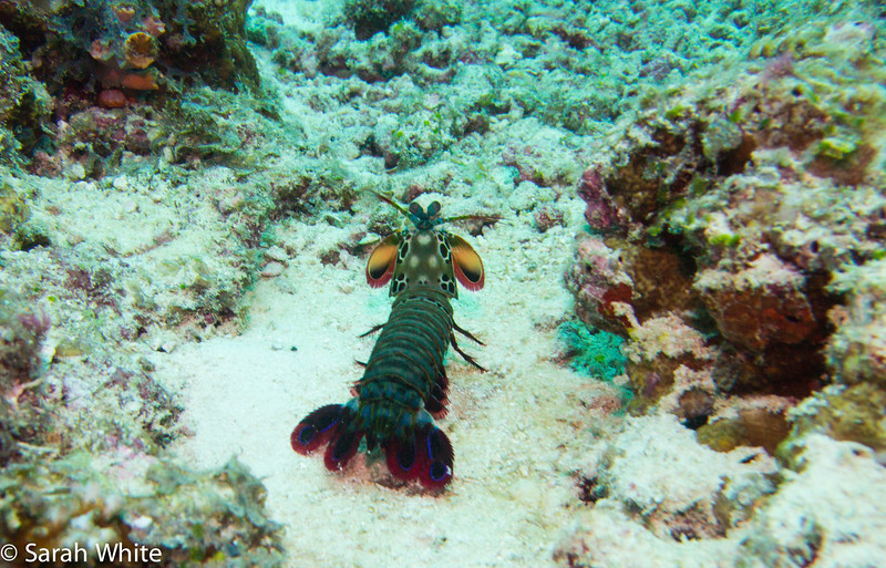 Maldives 2012-434.jpg