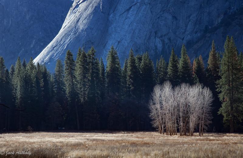 Yosemite Valley meadow