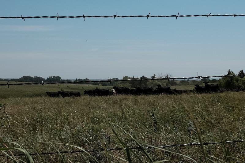 2019-07-23 Syngenta Nebraska-524.jpg