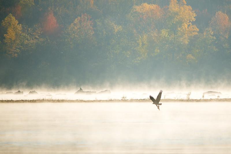 web eagle breakfast.jpg