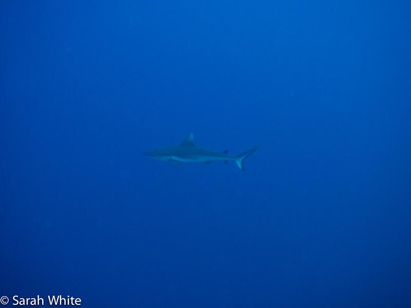 Project Shark 2013-145.jpg
