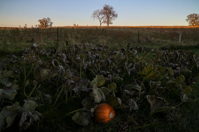 DA042,DP,Lonely Pumpkin.JPG