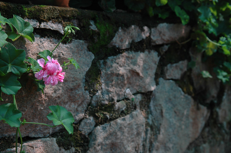 Flower garden near Munnar