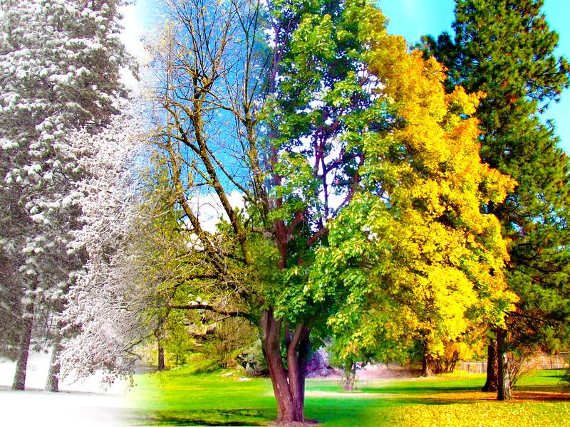 seasons2.jpg