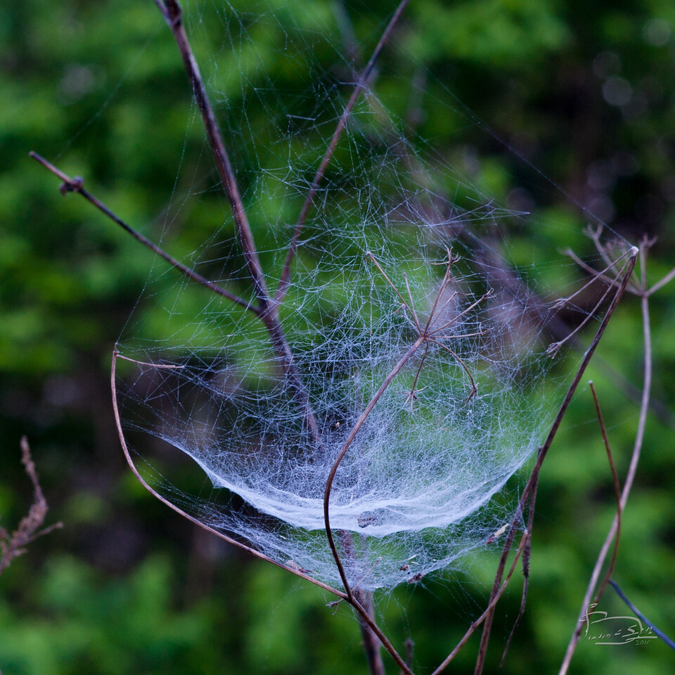 Spider web at Mt. Pleasant