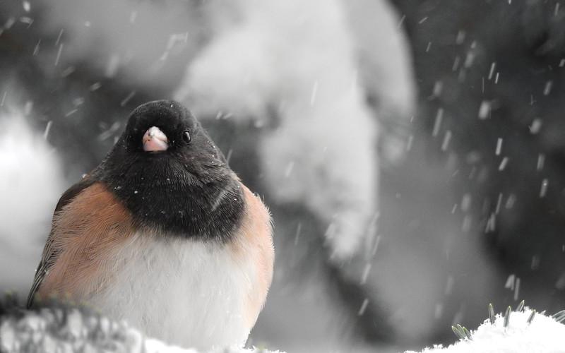 birds (227).JPG