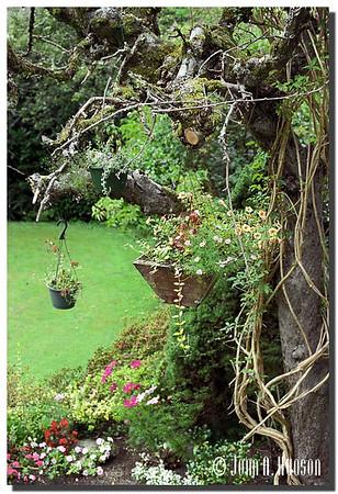 Tranquil city garden plant holders