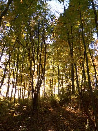 Bull Hill & Tree Line Trail