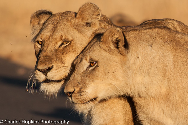 Kruger National Park Sep 2014