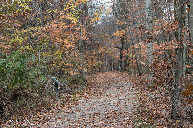 fall scene 111917-5.jpg