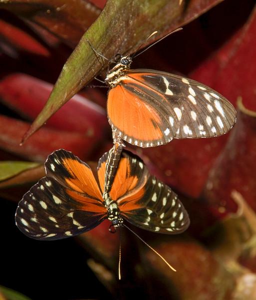 Costa Rica_Butterflies-1.jpg
