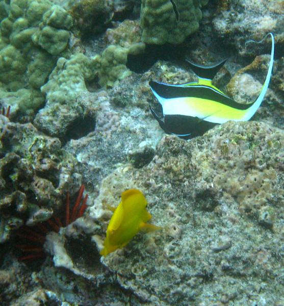 522- 20080416- Hawaii 20-Snorkelling IMG_0782.jpg