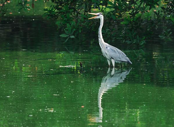 Birding Vedanthangal - Aug 2008