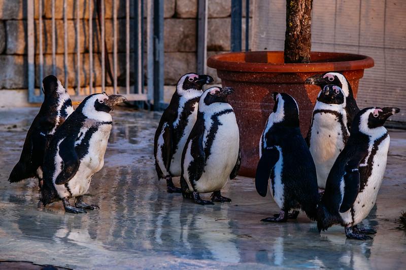 Tonis Zoo-0507.jpg