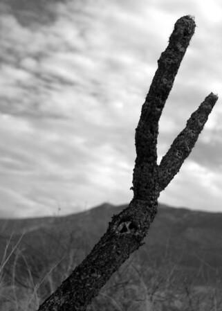Catalina State Park Misc Volume 2