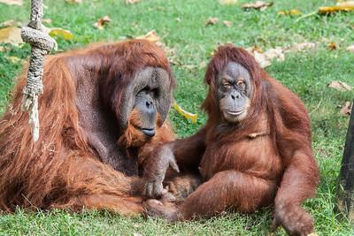 Memphis-Zoo-Fall-2014