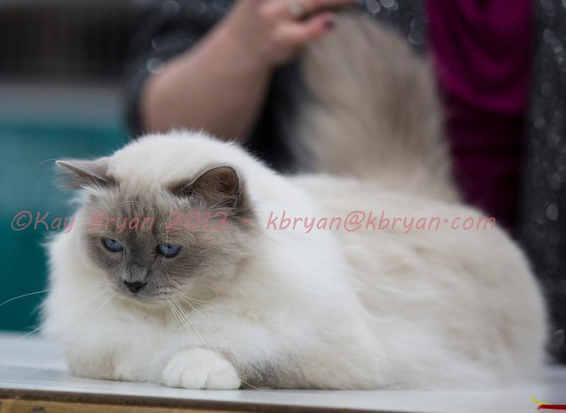 CatShow2014122.jpg