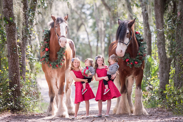 Clydesdales Nov 2018 Phillips Family