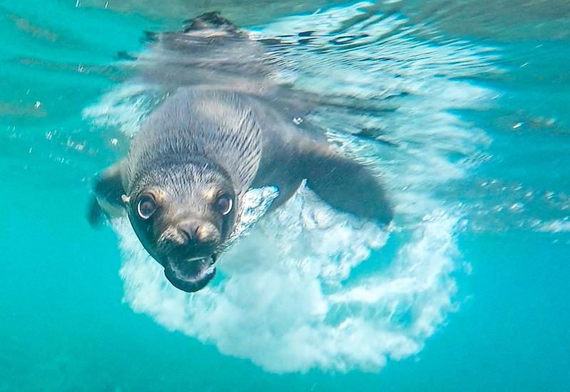 Sea Lion Attack?-2.jpg